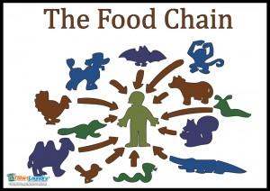 the food chain (source: www.tshirtlaundry.com).