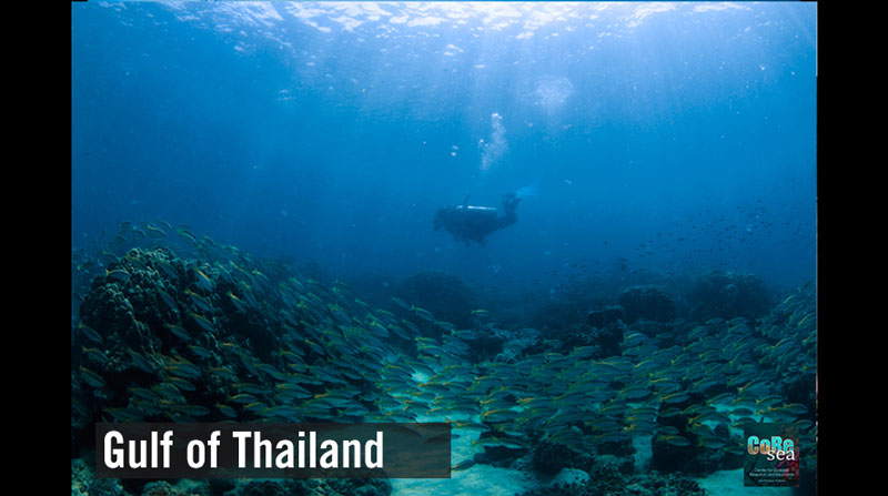 About the state of health of the Gulf of Thailand (3)