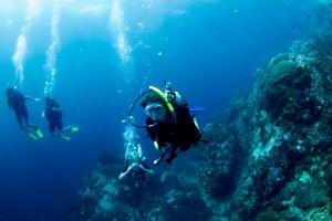 Scientific diving in the marine park