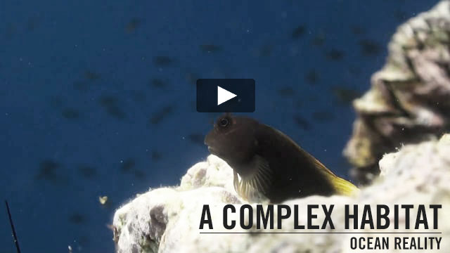 A COMPLEX HABITAT | by Ocean Reality