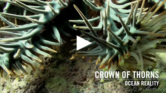 Crown of Thorns | by Ocean Reality